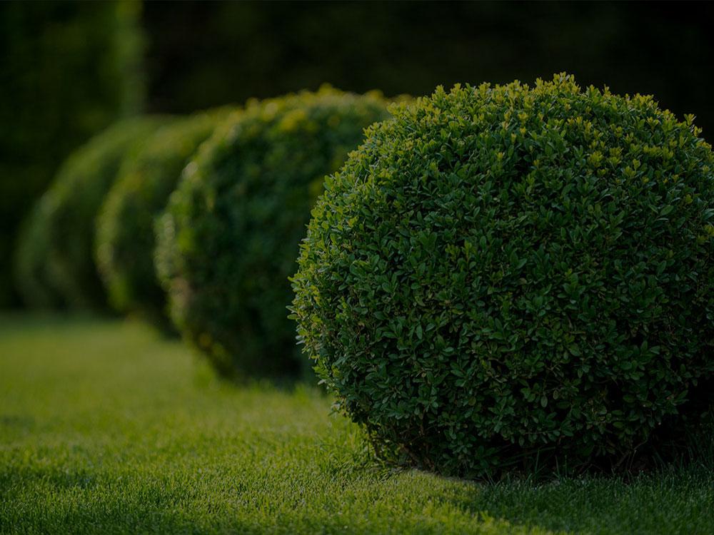 Summerfield Landscaping