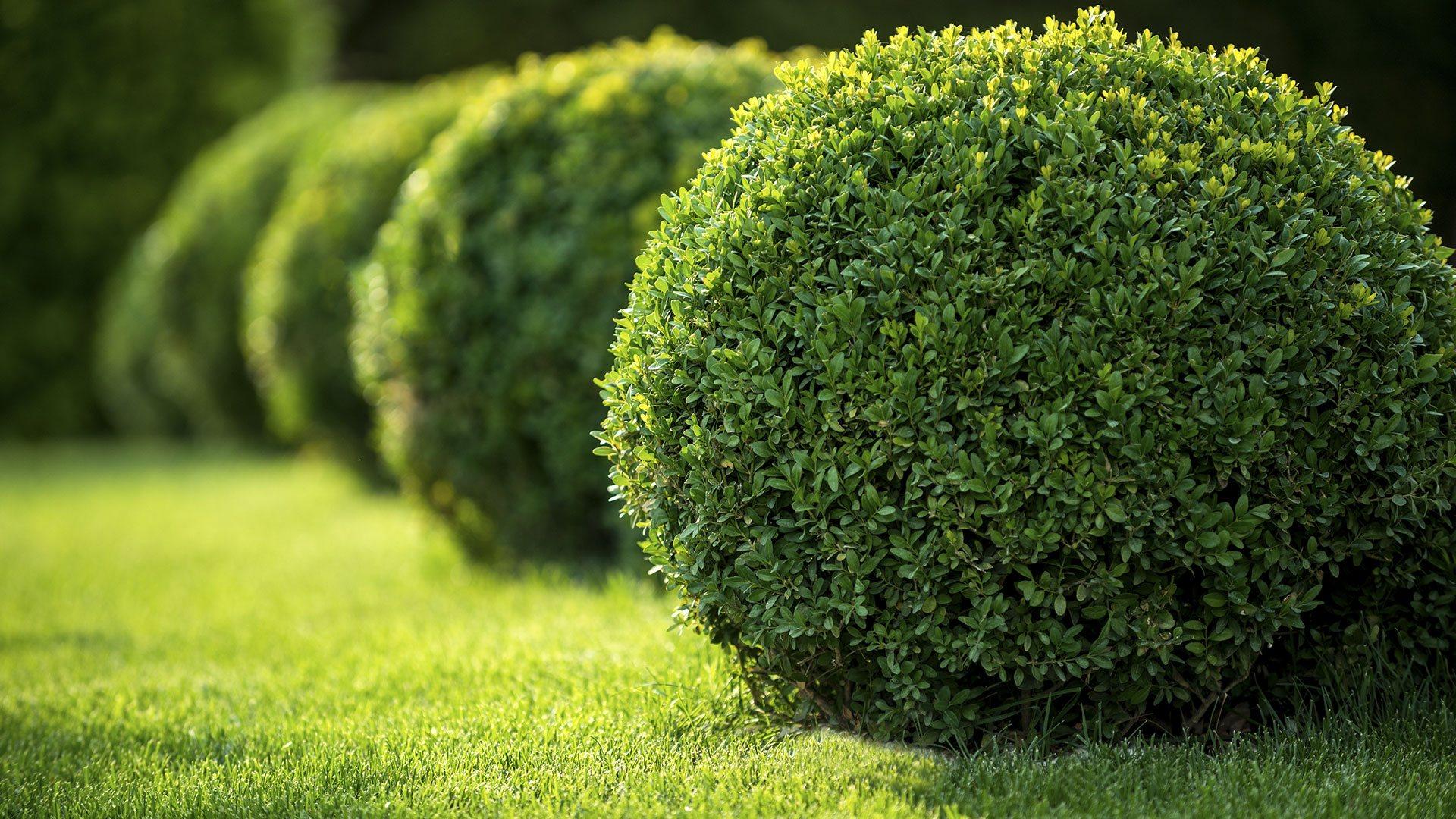 Carolina Landscape Associates Inc. Landscaping slide 1